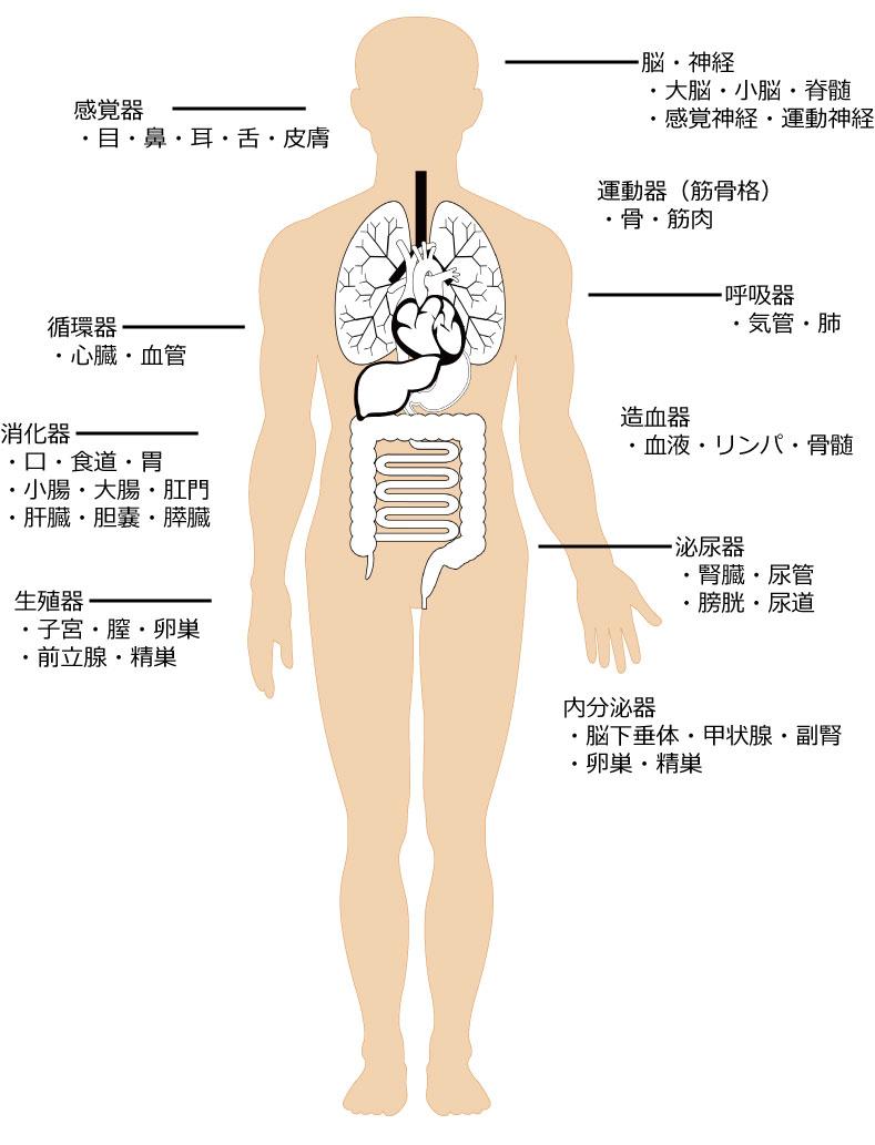 医学知識検定
